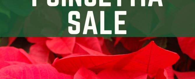 Poinsettia Sale Web Image (2)